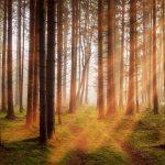 Nordisch by Nature spielen im Wald